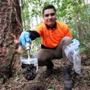 New council kauri dieback team in place