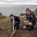Local enthusiasts boost Northland sea bird colonies